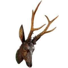 Carved Wood Baroque Roe Deer Head, circa 1800
