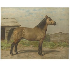 Antique Print of the Canadian Horse by O. Eerelman, 1898