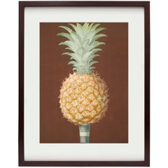 Jagged Leaf Black Antigua Pineapple from Pomona Britannica by George Brookshaw