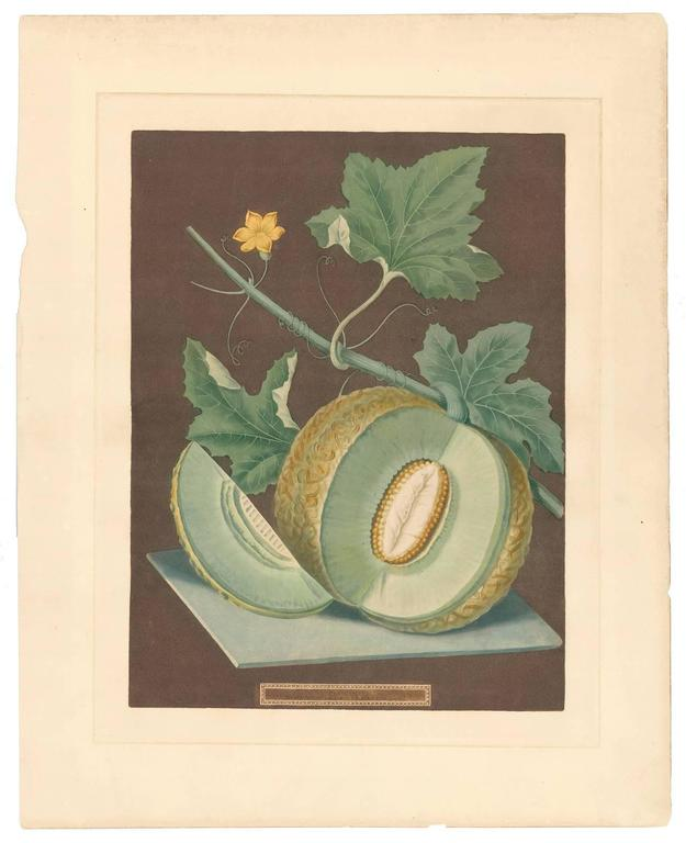 Green Flesh or Candia Melon Aquatint by George Brookshaw For Sale 2