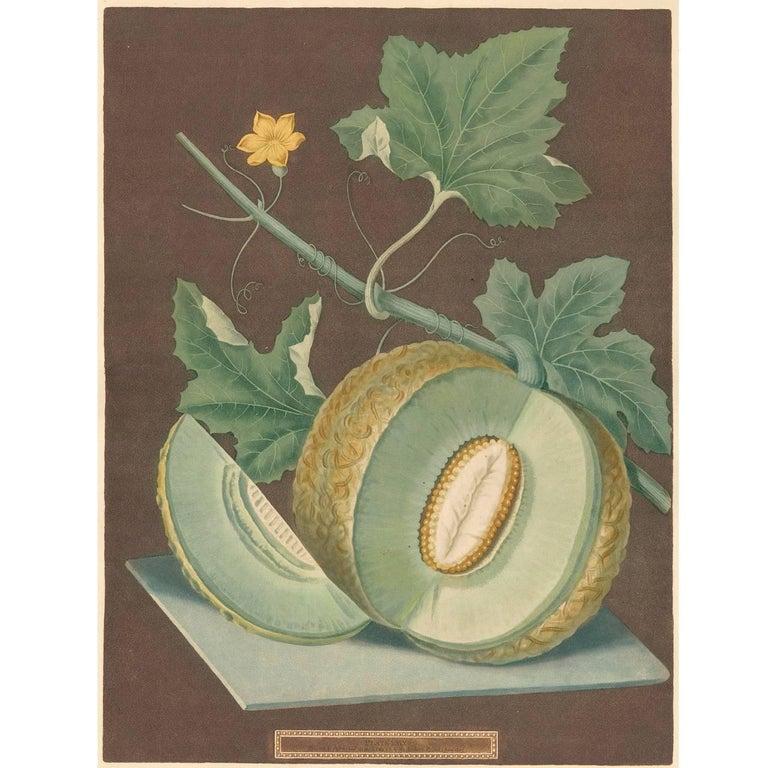 Green Flesh or Candia Melon Aquatint by George Brookshaw - Print by george brookshaw