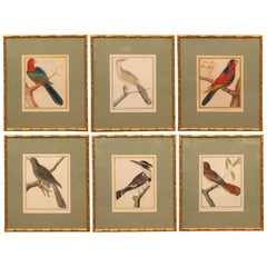 Set of Six Hand-Colored Bird Engravings