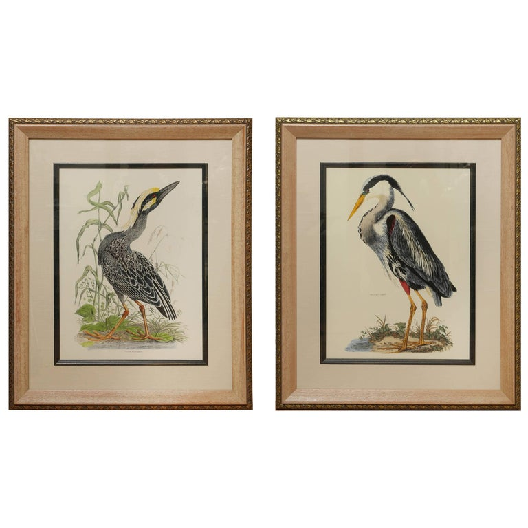 Large Pair of Hand Colored Bird Prints