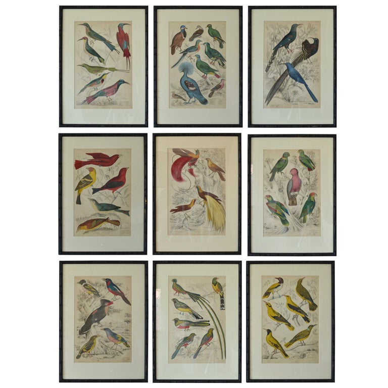 Set of Nine Antique Bird Prints in Faux Bamboo Frames, 1830s