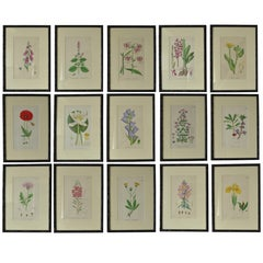 Set of 15 Antique Botanical Prints in Faux Bamboo Frames, circa 1850