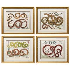 Set of Four Albertus Seba Hand-Colored Snake Prints