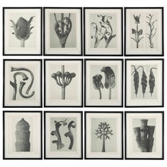 Botanical Photogravures by Karl Blossfeldt, Berlin 1928, Set of 12