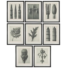 Botanical Photogravures by Karl Blossfeldt, Berlin 1928, Set of 8