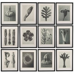 Botanical Photogravures by Karl Blossfeldt, Berlin, 1928, Set of 12