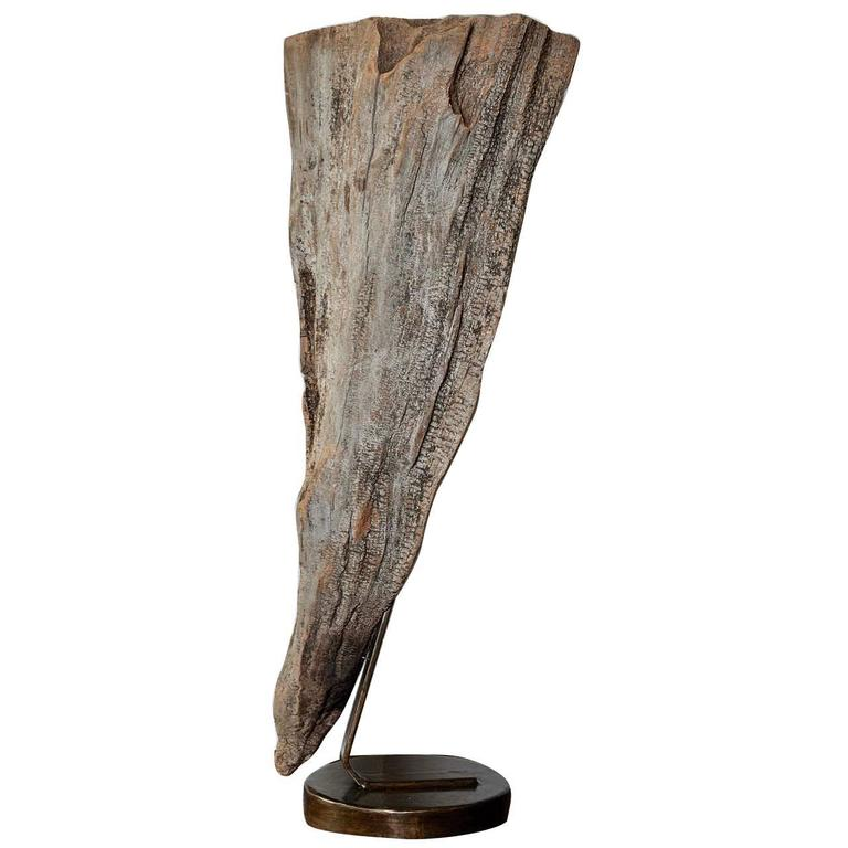 Large Organic Cypress Knee Sculptural Expression on Iron Mount