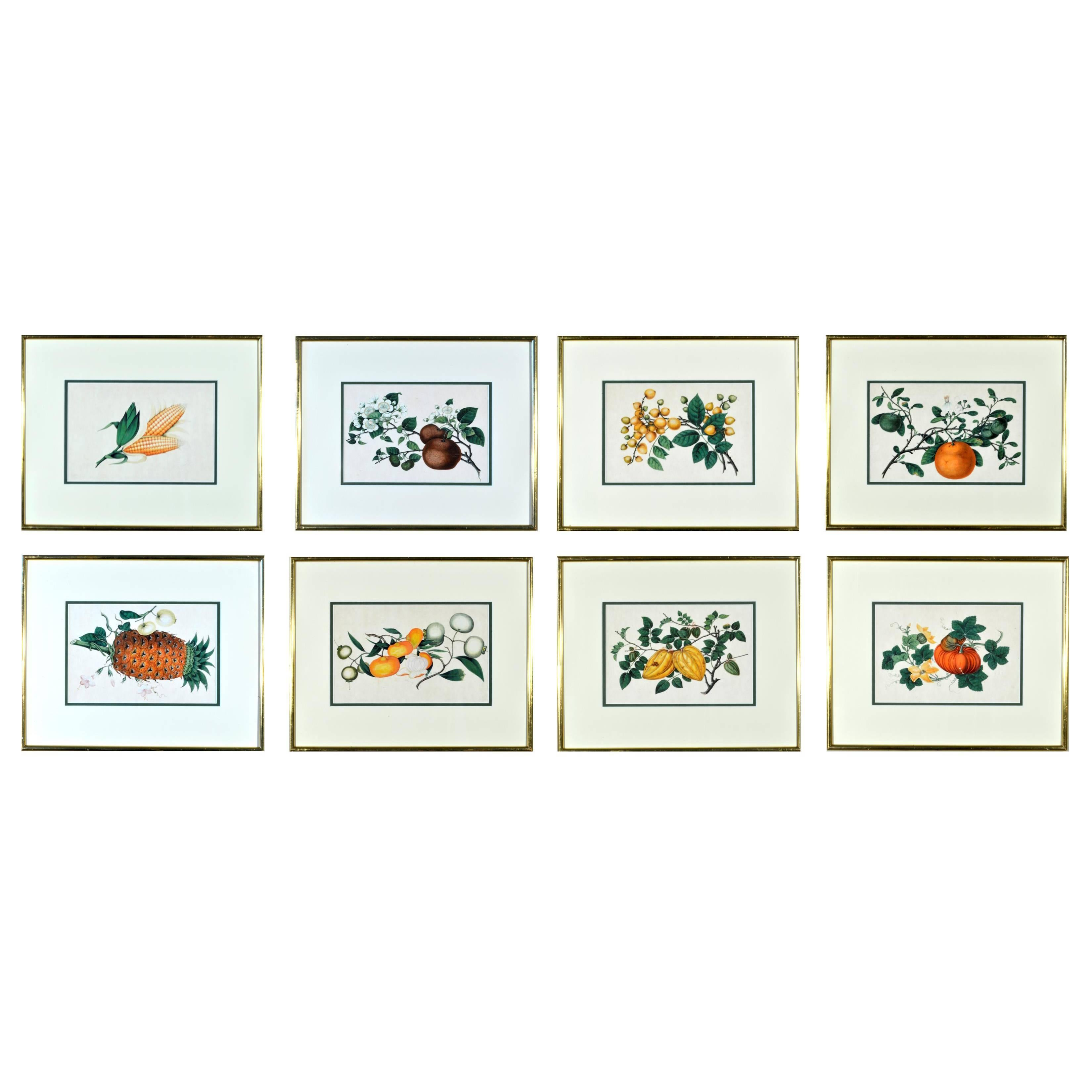China trade watercolour paintings of vegetables set of six mid china trade watercolour paintings of vegetables set of six mid 19th century for sale at 1stdibs jeuxipadfo Image collections