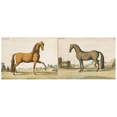 Baron D'Eisenberg Pair of 18th Century Engravings of Horses