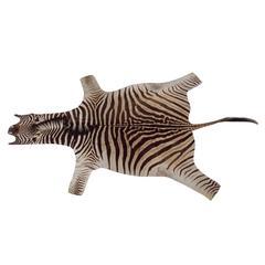 Zebra Hide Trophy Rug