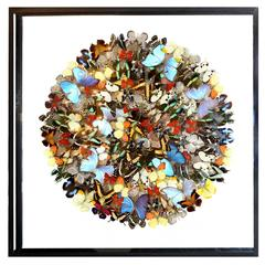 Butterflies Multicolors Arranged Under Framework