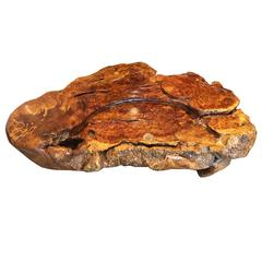 Superb Natural Organic Burl wood Coffee Or Display Table Fine Quality Showcase
