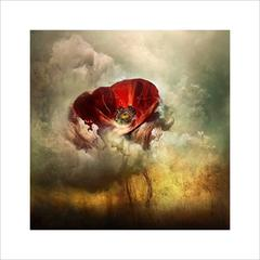 War Poppy 3, 2015 by Giles Revell