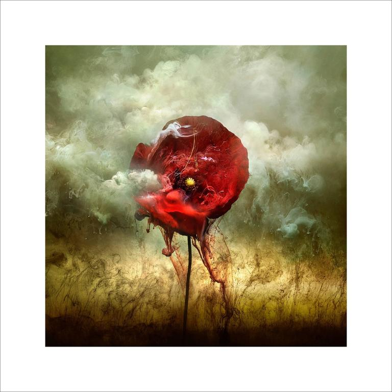 War Poppy 2, 2015 Contemporary Photograph by Giles Revell 1