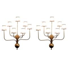 Pair of Large 7 Arm Brass Sconces