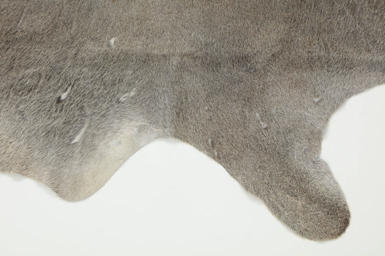 Modern Contemporary Gray Brazilian Cowhide Rug, 2016 For Sale