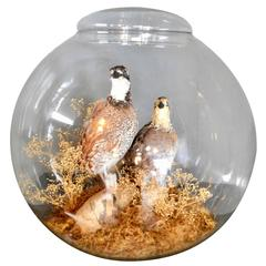 Taxidermy Terrarium with Two Perched Birds