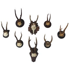 Set of Eight Antique Deer Trophies