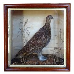 19th Century Bird Box or Diorama