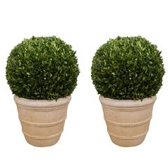 Large Boxwood Potted Ball Topiary