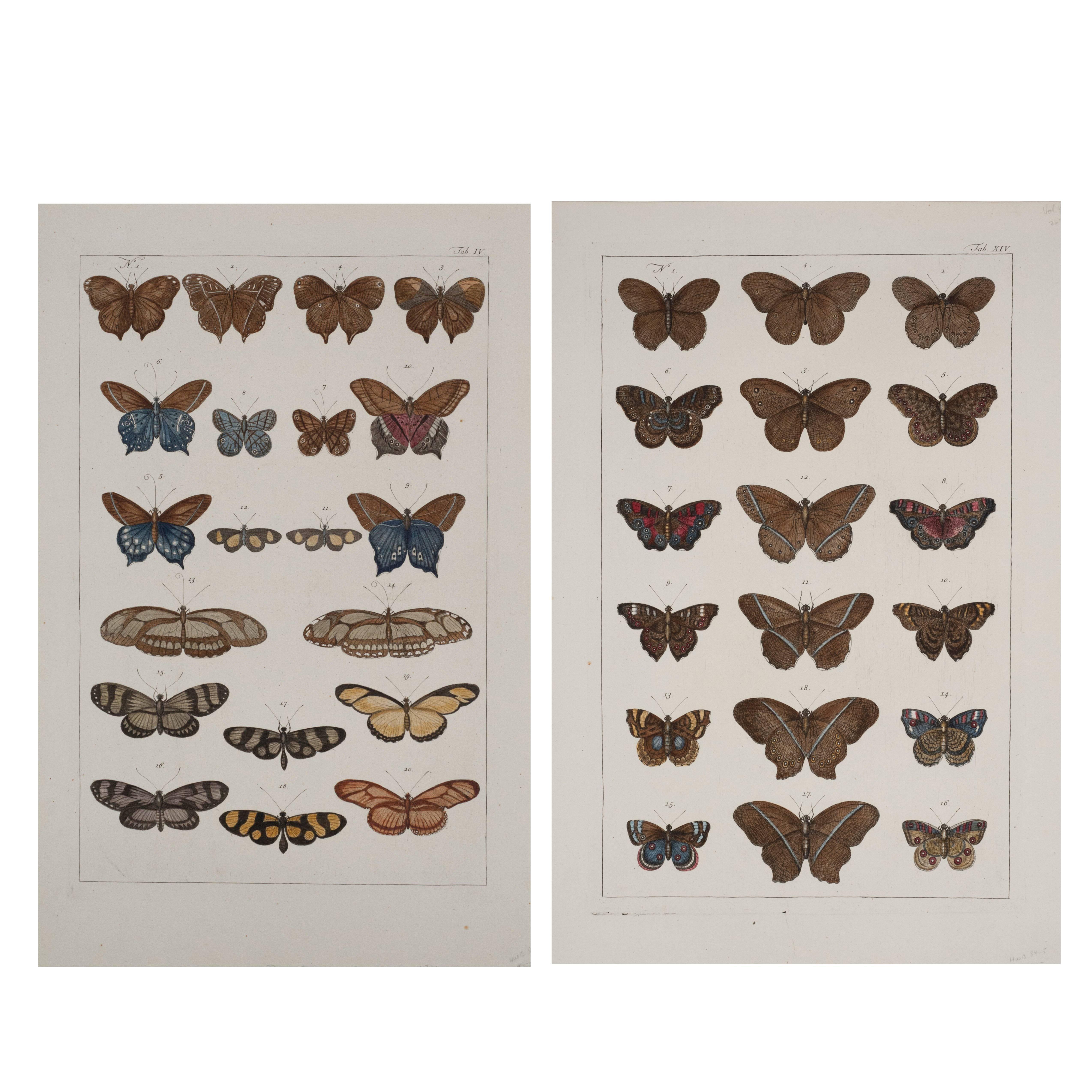 Antique Albertus Seba Pair 18th Century Hand-Colored Engravings Butterflies