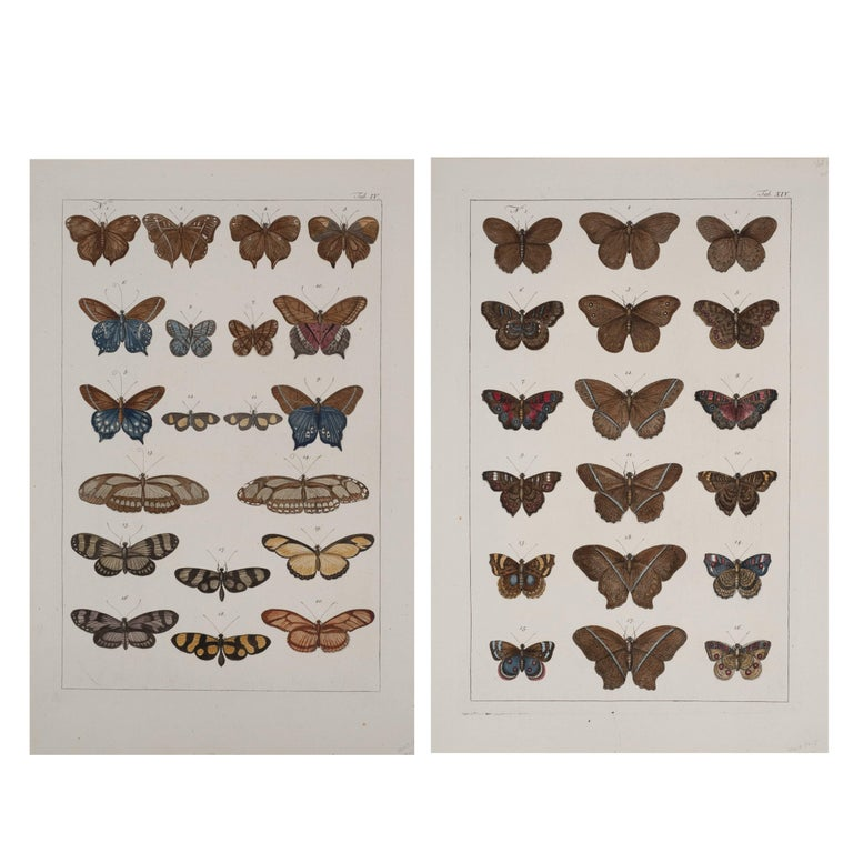 Antique Albertus Seba Pair 18th Century Hand-Colored Engravings Butterflies For Sale
