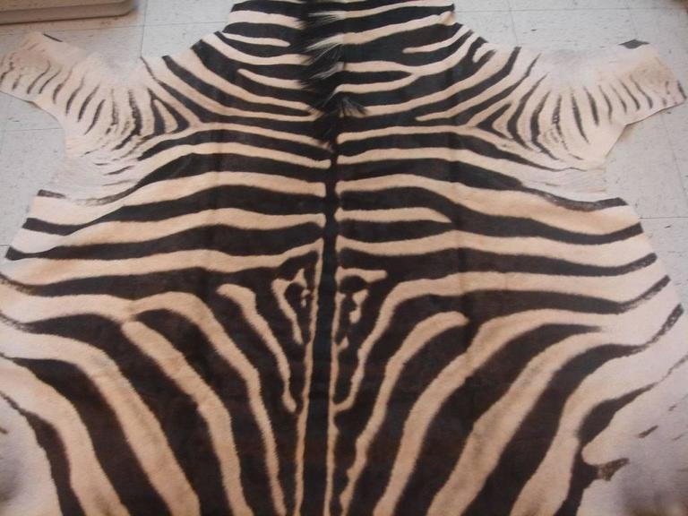 Vintage and authentic zebra skin area rug, Africa, circa 1980.
