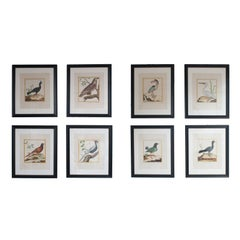 Ten Hand Colored Engravings of Birds in New Frames & Matting. By Martinet.