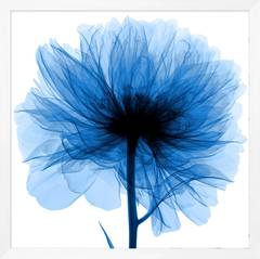 Blue X-Ray Flower Prints