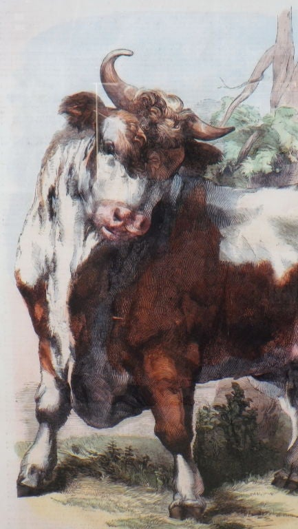 Limited Edition Agricultural Print 2