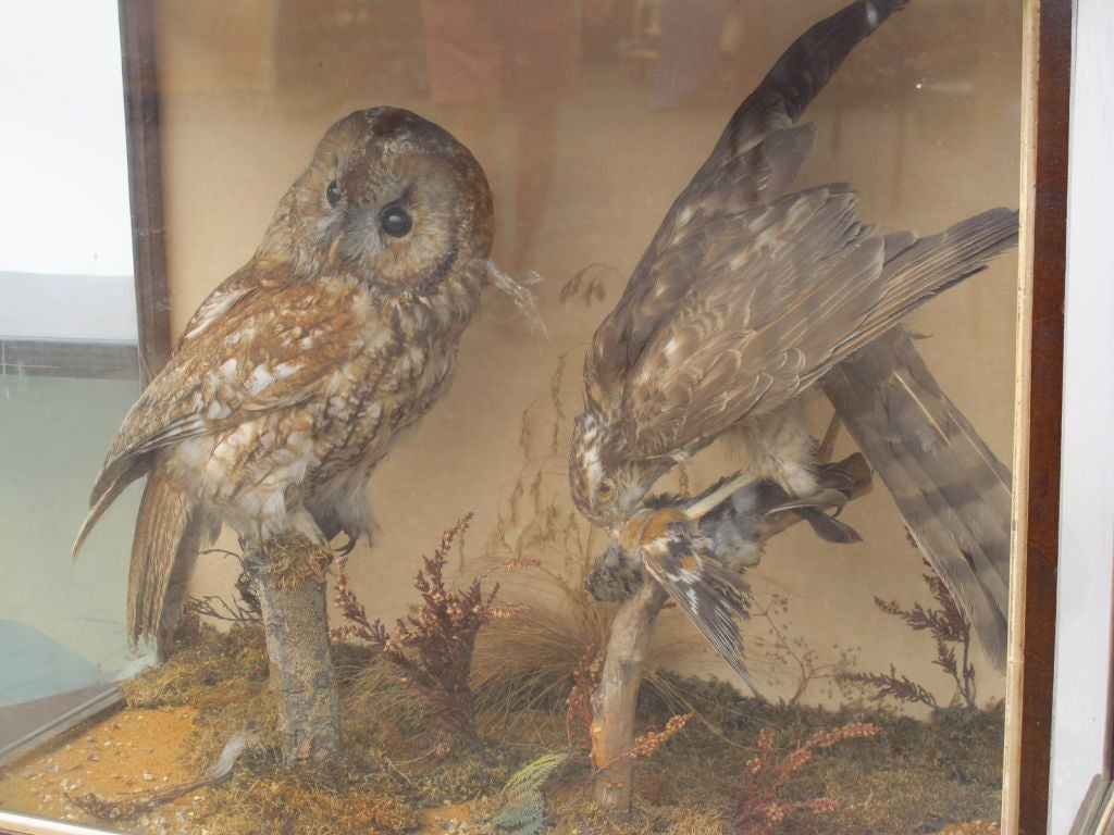 Taxidermy Owls image 4