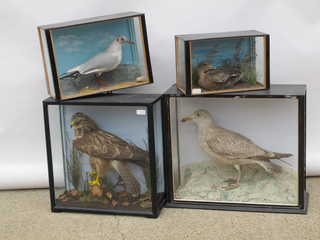 Taxidermy Birds image 2