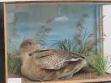 Taxidermy Birds thumbnail 5