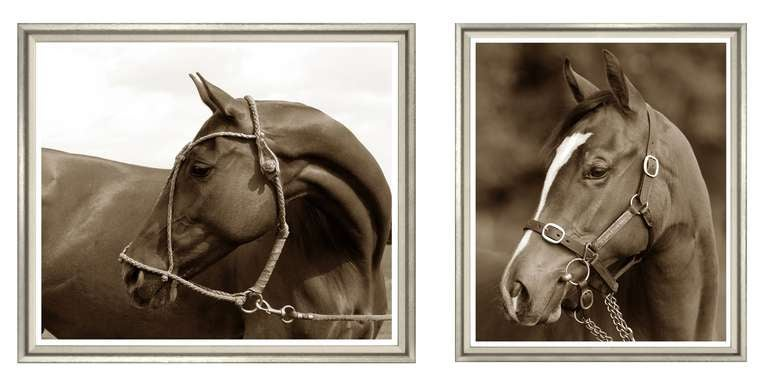 Sepia horse prints large for sale