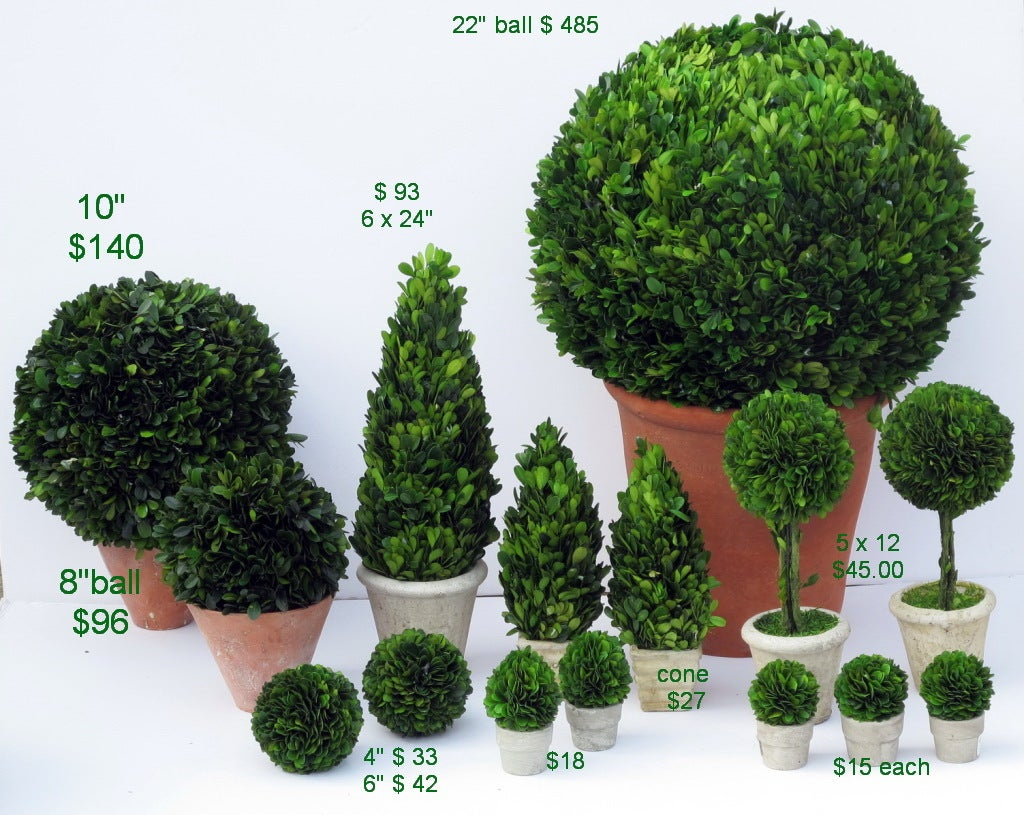 preserved boxwood topiary 2