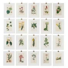 Set of 20 Curtis Botanical Prints