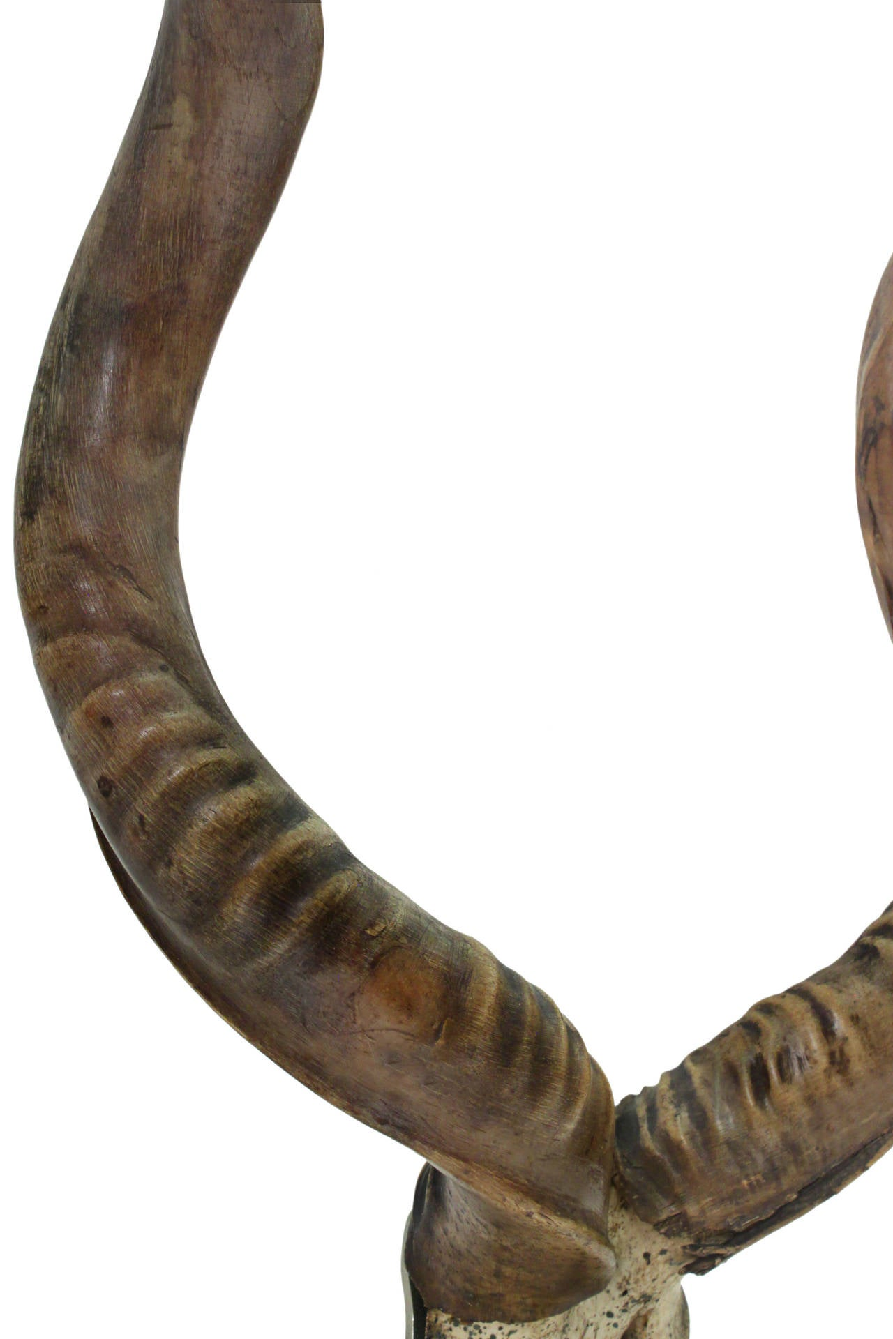 Large Mounted African Antelope Horns On Custom Base At 1stdibs