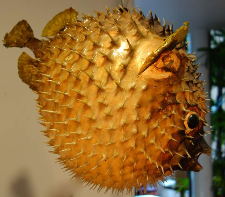 Giant vintage puffer fish chandelier at 1stdibs for Puffer fish price