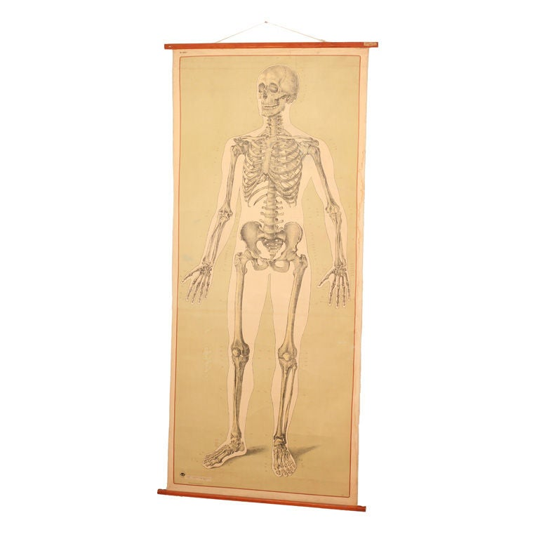 Vintage anatomy chart with you