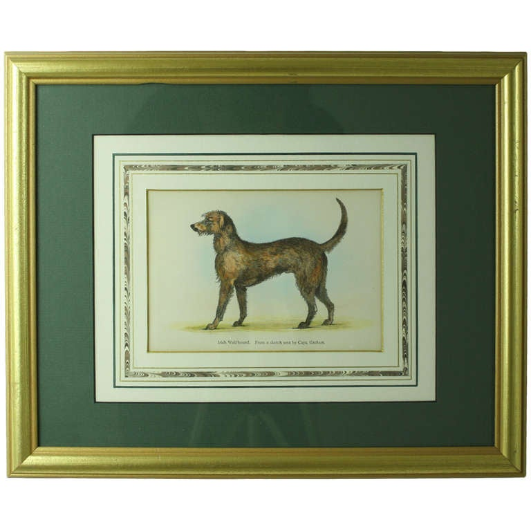 Four Antique English Hand Colored Dog Plates For Sale At