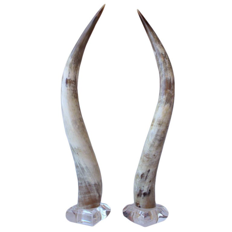 Pair of polished steer horns on lucite at 1stdibs pair of polished steer horns on lucite 1 sciox Choice Image
