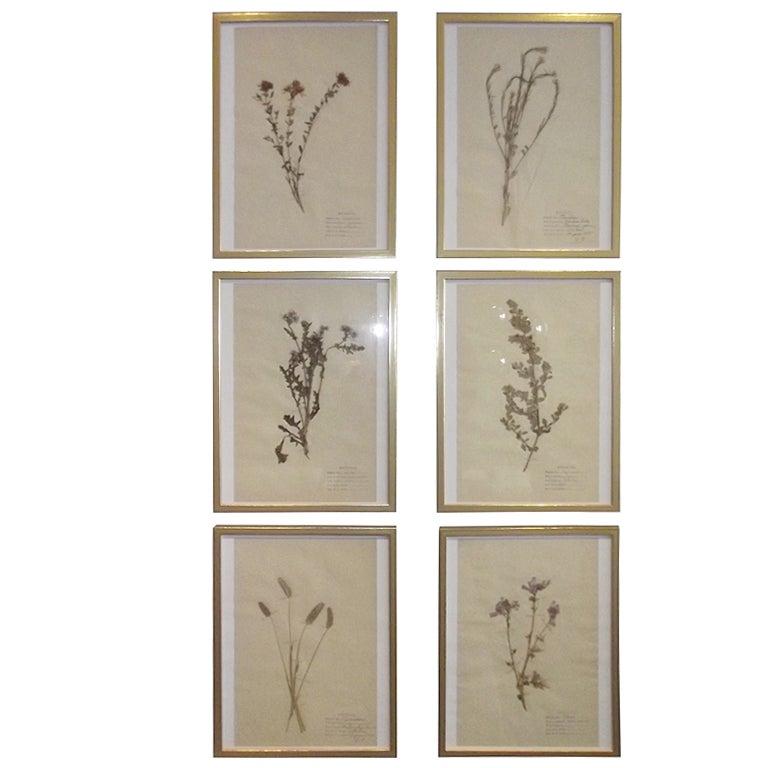 Set of Six Framed Pressed Botanicals at 1stdibs