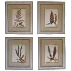 Collection of Early 19th Century Herbariums / Botanical Specimens