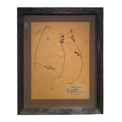 Framed Botanical. Study #6