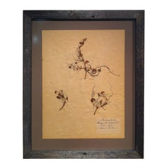 Framed Botanical. Study #5