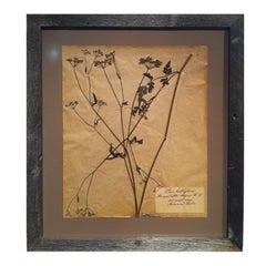 Framed Botanical. Study #4