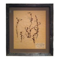 Framed Botanical. Study #3